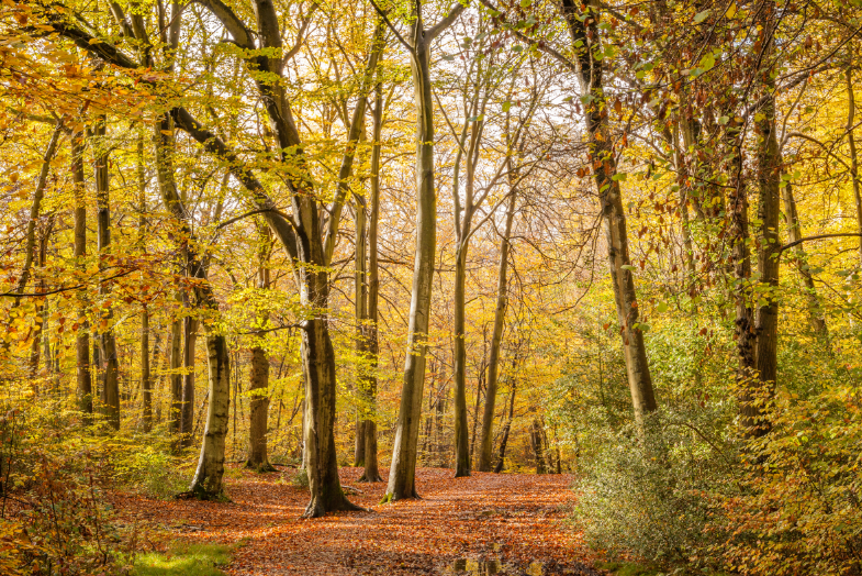 burnham beeches nature reserve | Burnham Beeches Hotel