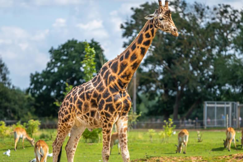 Safari Park | The Regency Hotel